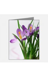 20 Notecards and Envelopes, Crocuses